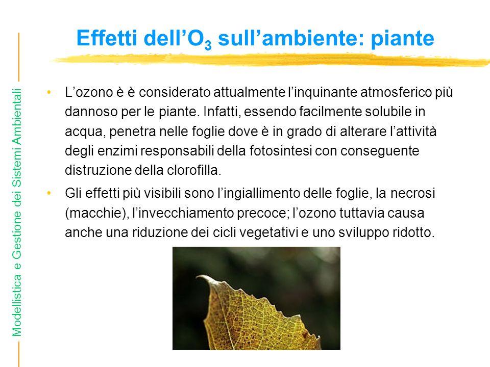 Modellistica e Gestione dei Sistemi Ambientali Effetti dellO 3 sullambiente: piante Lozono è è considerato attualmente linquinante atmosferico più dan