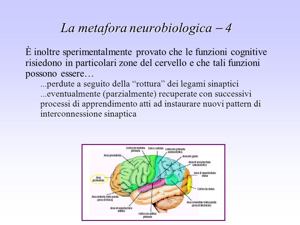 Sistemi di supporto alle decisioni - Leonardo Rigutini La metafora neurobiologica 4 È inoltre sperimentalmente provato che le funzioni cognitive risie