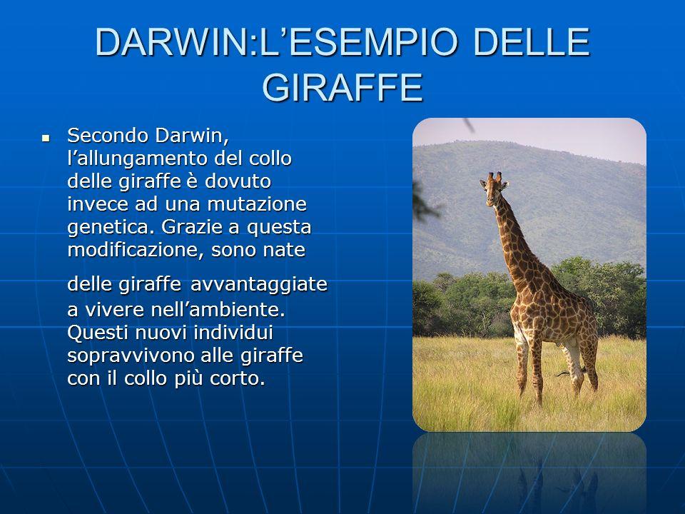 DARWIN:LESEMPIO DELLE GIRAFFE Secondo Darwin, lallungamento del collo delle giraffe è dovuto invece ad una mutazione genetica. Grazie a questa modific