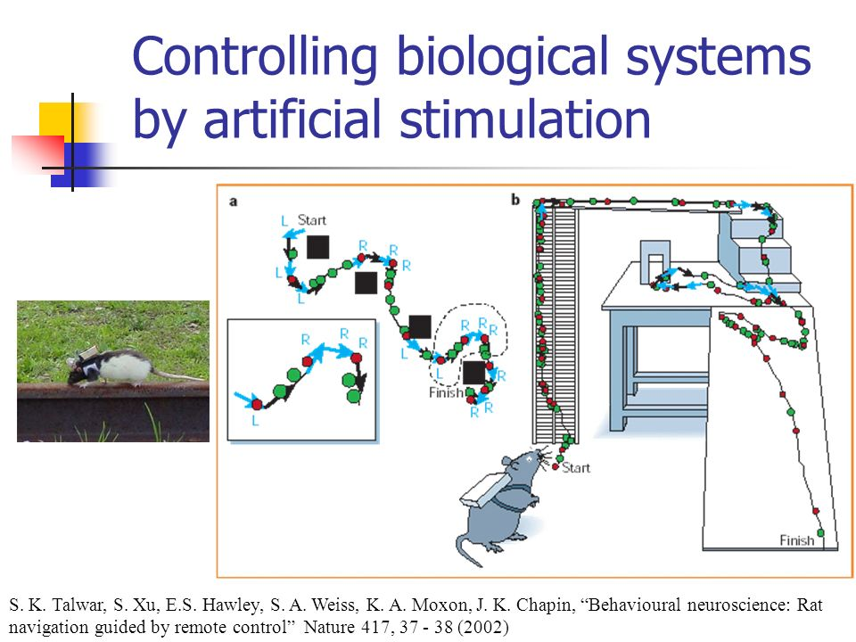 Controlling biological systems by artificial stimulation S. K. Talwar, S. Xu, E.S. Hawley, S. A. Weiss, K. A. Moxon, J. K. Chapin, Behavioural neurosc