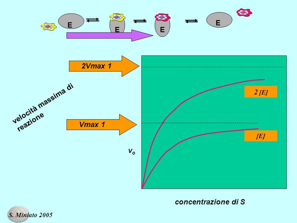 vovo concentrazione di S velocità massima di reazione E EE E 2Vmax 1Vmax 1 [E] 2 [E] S. Miniato 2005