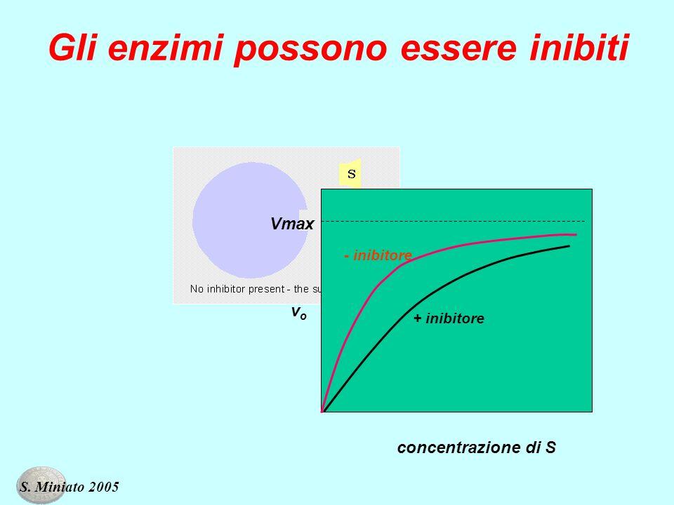 Gli enzimi possono essere inibiti vovo concentrazione di S Vmax + inibitore - inibitore S. Miniato 2005