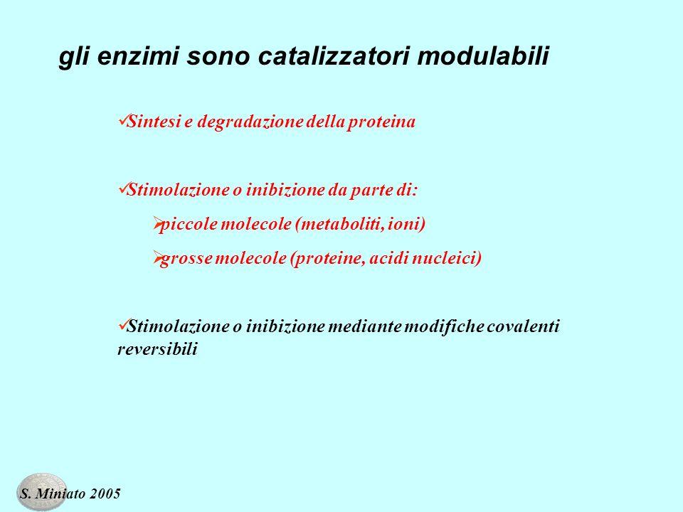 gli enzimi sono catalizzatori modulabili Sintesi e degradazione della proteina Stimolazione o inibizione da parte di: piccole molecole (metaboliti, ioni) grosse molecole (proteine, acidi nucleici) Stimolazione o inibizione mediante modifiche covalenti reversibili S.