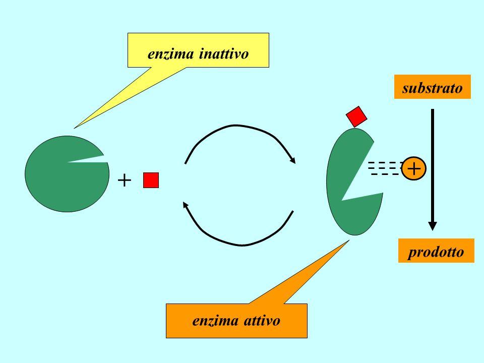 + enzima inattivo enzima attivo substrato prodotto +