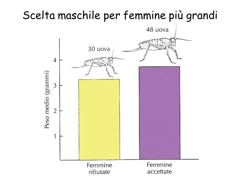 Spermatofore commestibili
