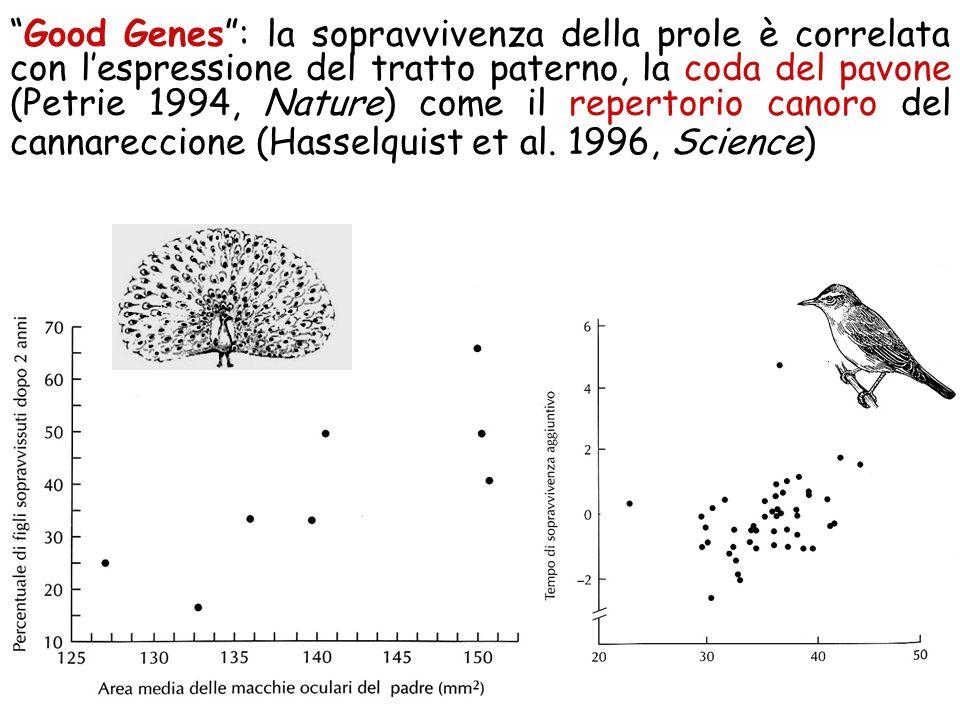 I figli di pavoni con coda più ornata pesano di più (a 3 mesi), ereditano code più ornate e sopravvivono più a lungo in natura. (Petrie, 1994 Nature)