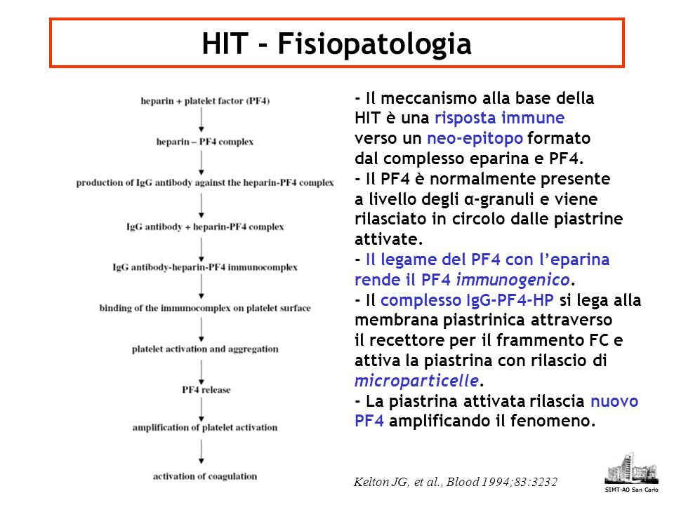 HIT - Fisiopatologia - Il meccanismo alla base della HIT è una risposta immune verso un neo-epitopo formato dal complesso eparina e PF4.