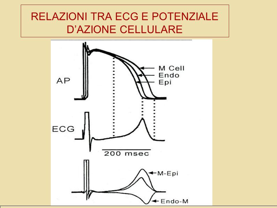 RELAZIONI TRA ECG E POTENZIALE DAZIONE CELLULARE