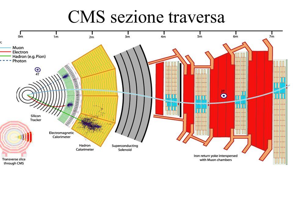 CMS sezione traversa