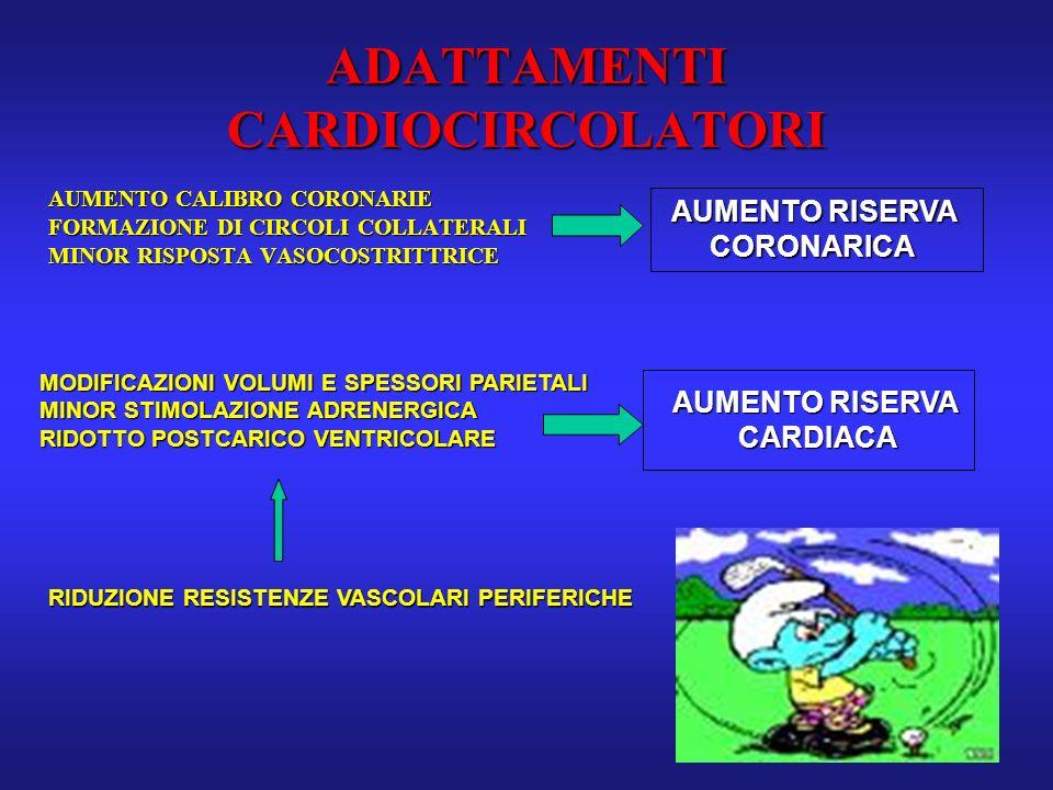 ADATTAMENTI CARDIOCIRCOLATORI AUMENTO CALIBRO CORONARIE FORMAZIONE DI CIRCOLI COLLATERALI MINOR RISPOSTA VASOCOSTRITTRICE AUMENTO RISERVA CORONARICA M
