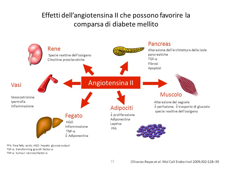 15 Angiotensina II Pancreas Muscolo Adipociti Vasi Rene Fegato HGO Infiammazione TNF-α Adiponectina Vasocostrizione Ipertrofia Infiammazione Specie re