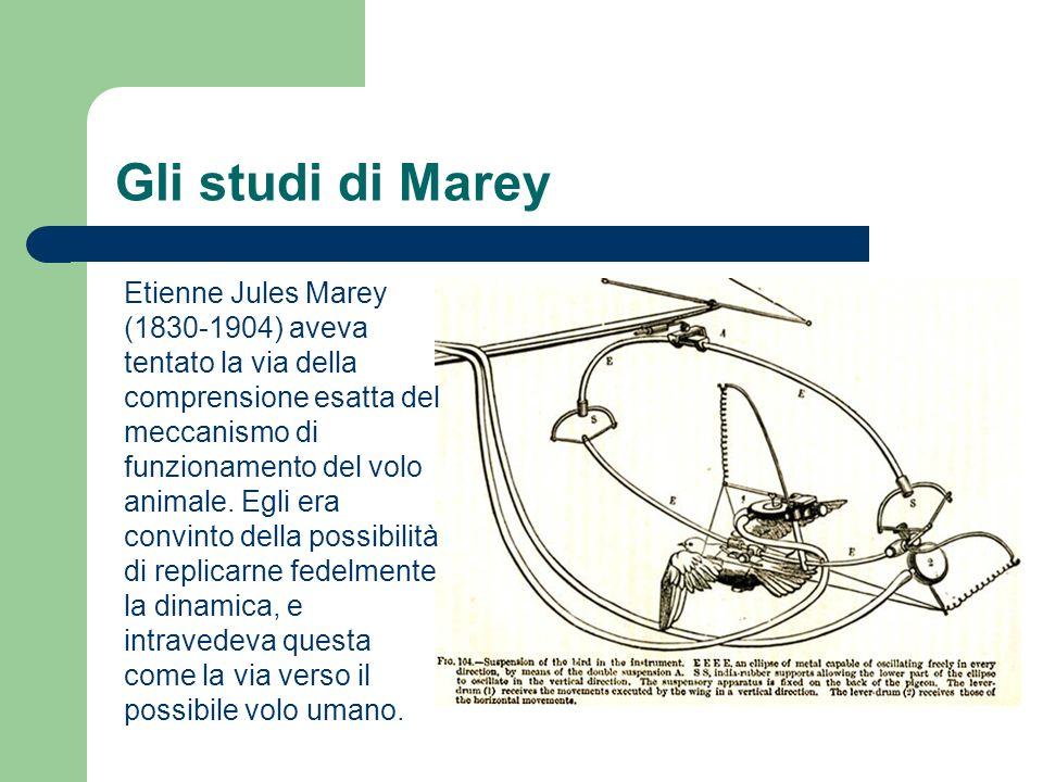 Gli studi di Marey Etienne Jules Marey (1830-1904) aveva tentato la via della comprensione esatta del meccanismo di funzionamento del volo animale. Eg