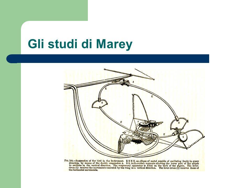 Gli studi di Marey