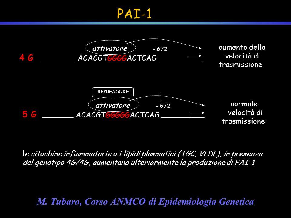 PAI-1 4 G ACACGTGGGGACTCAG attivatore - 672 aumento della velocità di trasmissione 5 G ACACGTGGGGGACTCAG attivatore - 672 normale velocità di trasmiss