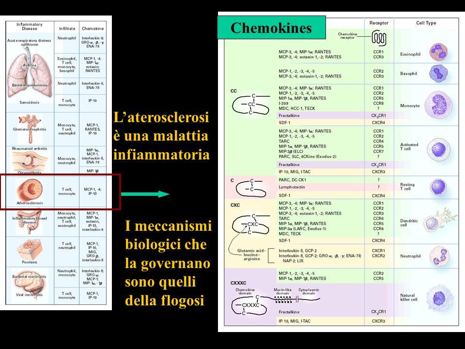 Laterosclerosi è una malattia infiammatoria Chemokines I meccanismi biologici che la governano sono quelli della flogosi
