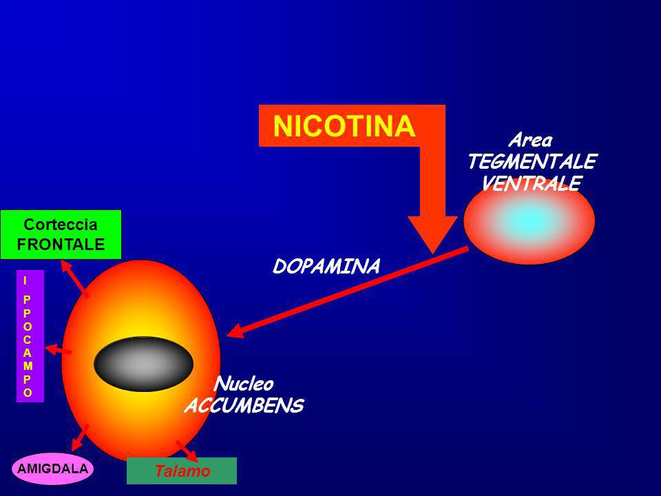 DOPAMINA Nucleo ACCUMBENS Area TEGMENTALE VENTRALE NICOTINA Corteccia FRONTALE AMIGDALA IPPOCAMPOIPPOCAMPO Talamo