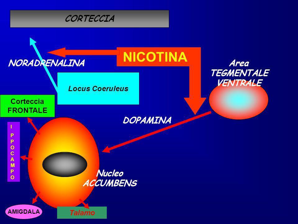 DOPAMINA Nucleo ACCUMBENS Area TEGMENTALE VENTRALE NICOTINA Locus Coeruleus CORTECCIA NORADRENALINA Corteccia FRONTALE AMIGDALA IPPOCAMPOIPPOCAMPO Tal