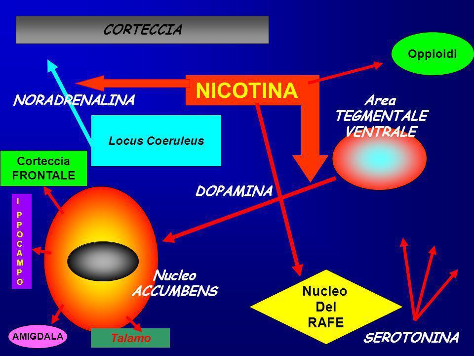 DOPAMINA Nucleo ACCUMBENS Area TEGMENTALE VENTRALE NICOTINA Locus Coeruleus CORTECCIA NORADRENALINA Nucleo Del RAFE SEROTONINA Corteccia FRONTALE AMIG