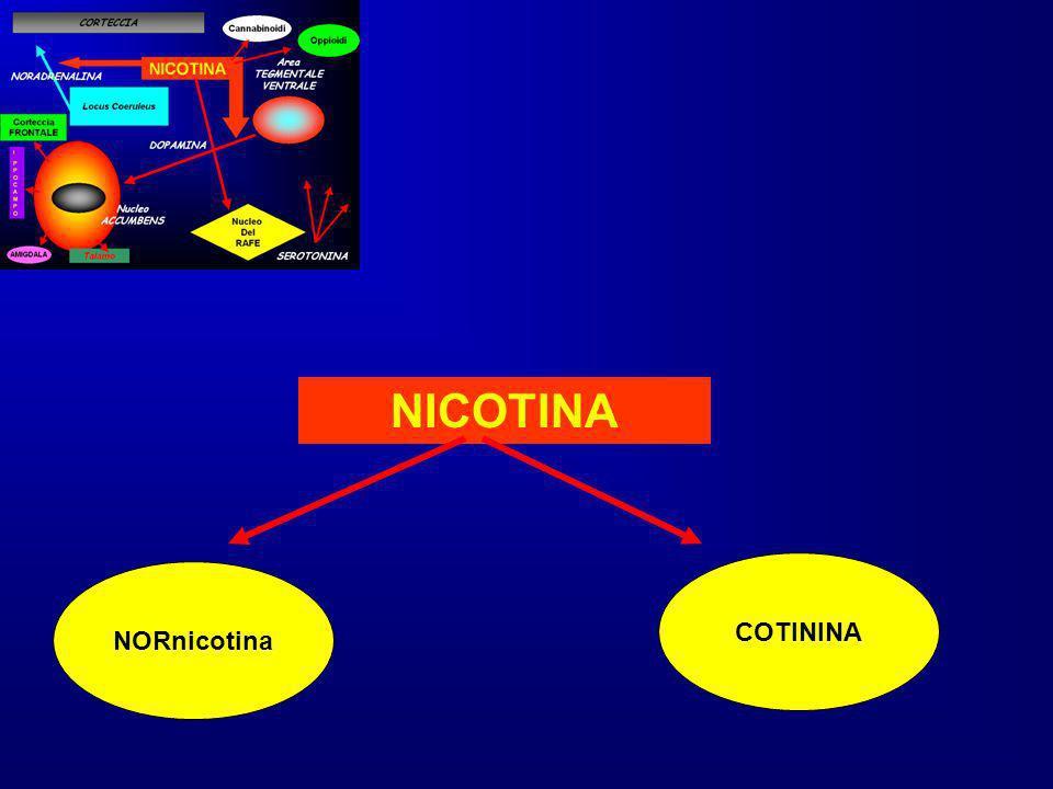 NICOTINA NORnicotina COTININA