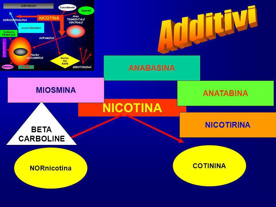 NICOTINA NORnicotina COTININA ANABASINA ANATABINA MIOSMINA NICOTIRINA BETA CARBOLINE