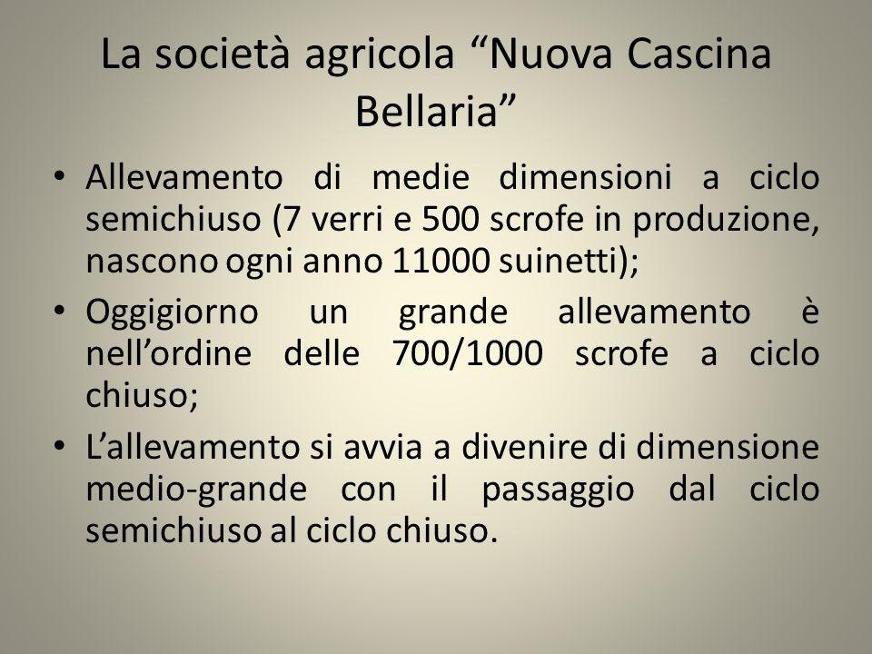 La società agricola Nuova Cascina Bellaria Allevamento di medie dimensioni a ciclo semichiuso (7 verri e 500 scrofe in produzione, nascono ogni anno 1