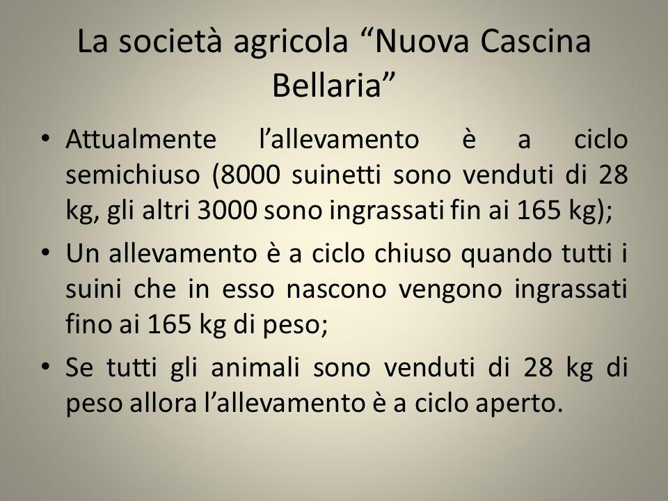 La società agricola Nuova Cascina Bellaria Attualmente lallevamento è a ciclo semichiuso (8000 suinetti sono venduti di 28 kg, gli altri 3000 sono ing