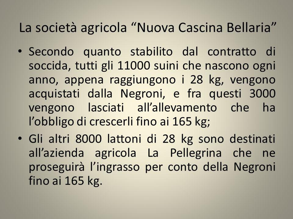 La società agricola Nuova Cascina Bellaria Secondo quanto stabilito dal contratto di soccida, tutti gli 11000 suini che nascono ogni anno, appena ragg