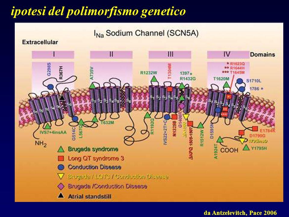 da Antzelevitch, Pace 2006 ipotesi del polimorfismo genetico