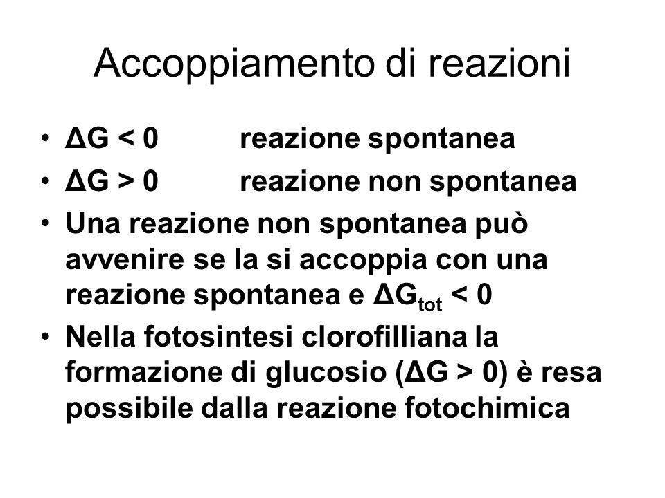 Accoppiamento di reazioni ΔG < 0reazione spontanea ΔG > 0reazione non spontanea Una reazione non spontanea può avvenire se la si accoppia con una reaz