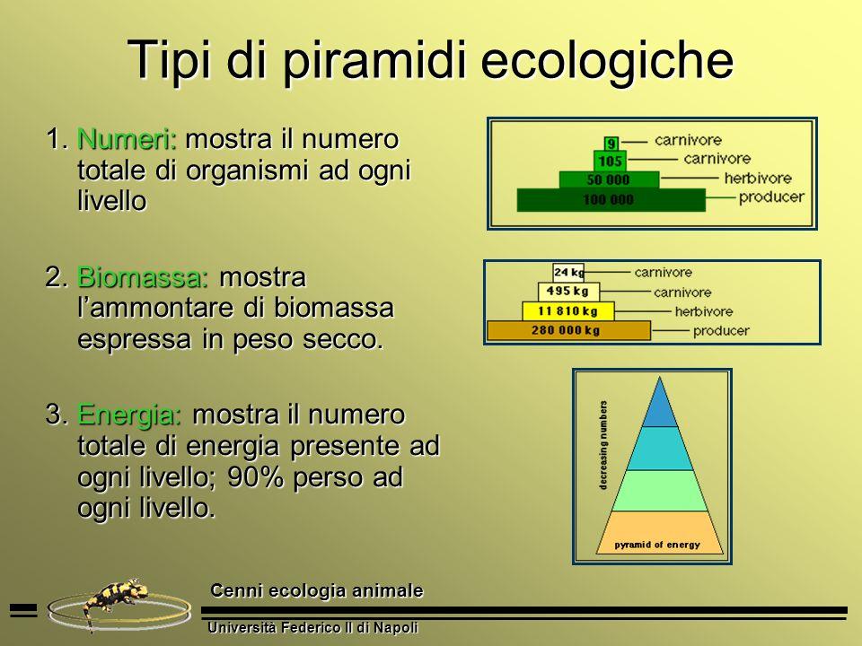 Università Federico II di Napoli Cenni ecologia animale Tipi di piramidi ecologiche 1. Numeri: mostra il numero totale di organismi ad ogni livello 2.