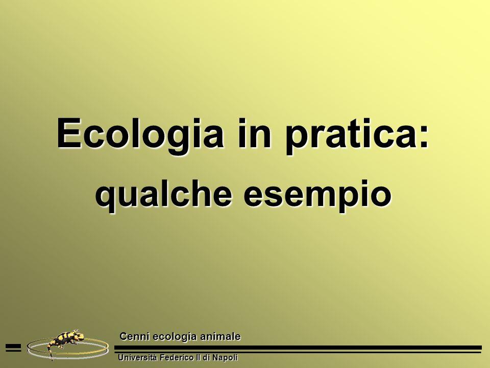 Università Federico II di Napoli Cenni ecologia animale Ecologia in pratica: qualche esempio