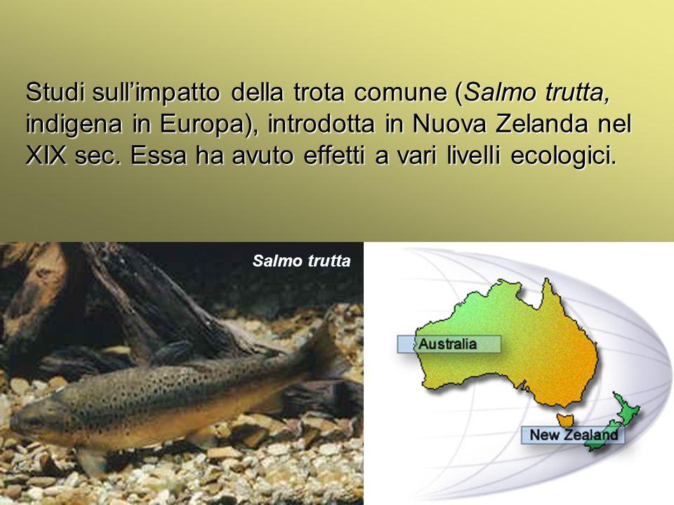 Università Federico II di Napoli Cenni ecologia animale Studi sullimpatto della trota comune (Salmo trutta, indigena in Europa), introdotta in Nuova Z