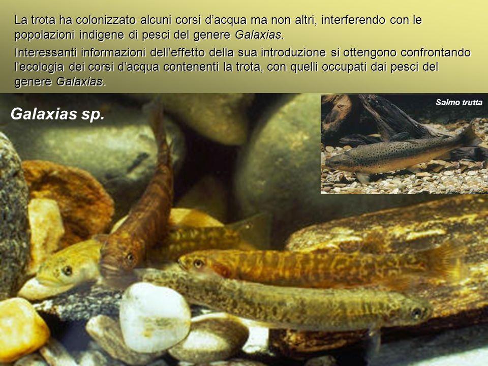 Università Federico II di Napoli Cenni ecologia animale La trota ha colonizzato alcuni corsi dacqua ma non altri, interferendo con le popolazioni indi