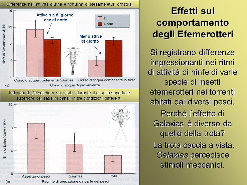 Università Federico II di Napoli Cenni ecologia animale Si registrano differenze impressionanti nei ritmi di attività di ninfe di varie specie di inse