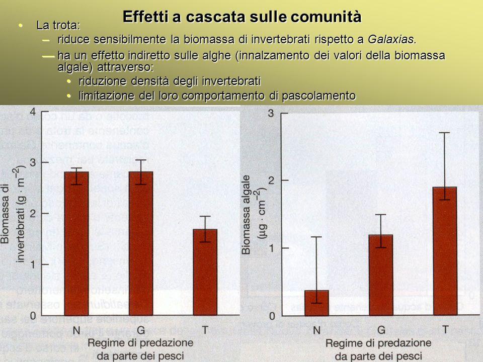 Università Federico II di Napoli Cenni ecologia animale Effetti a cascata sulle comunità La trota:La trota: –riduce sensibilmente la biomassa di inver