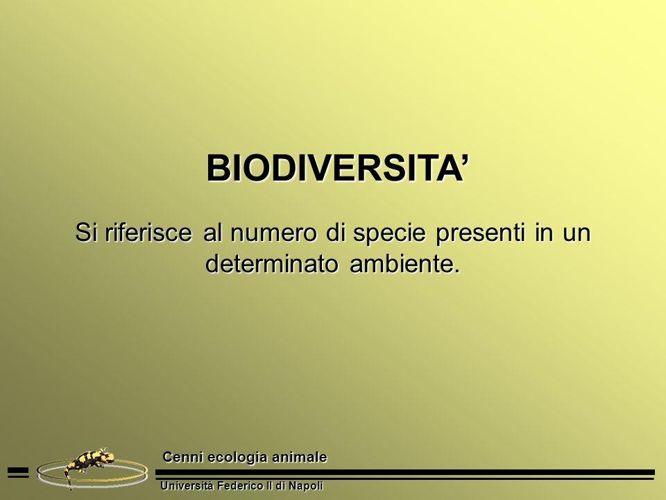Università Federico II di Napoli Cenni ecologia animale Si riferisce al numero di specie presenti in un determinato ambiente. BIODIVERSITA