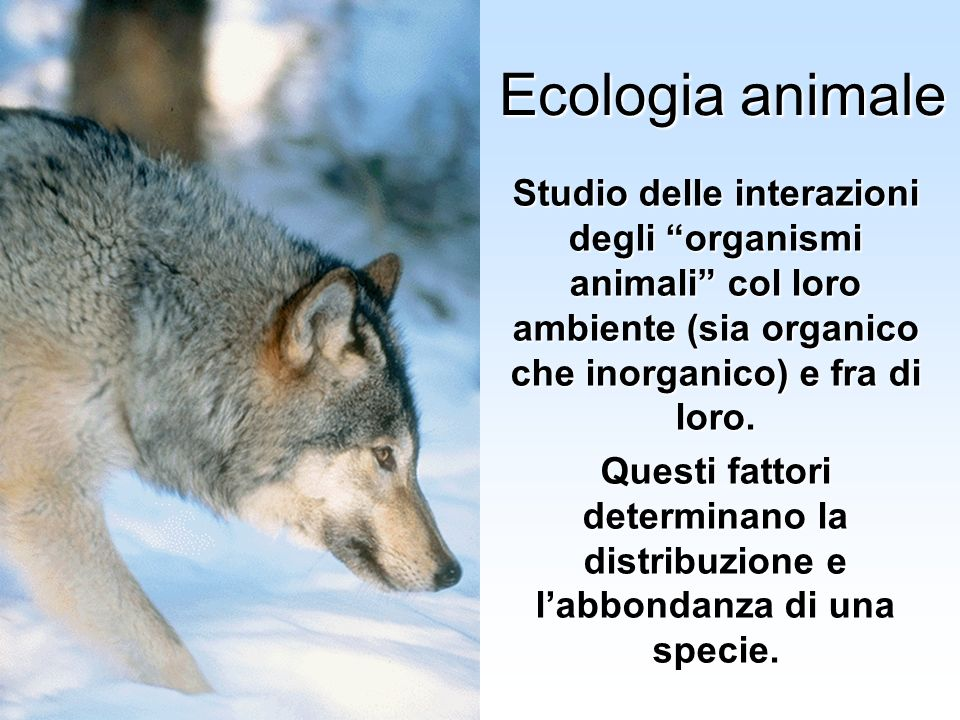 Università Federico II di Napoli Cenni ecologia animale Ecologia animale Studio delle interazioni degli organismi animali col loro ambiente (sia organ