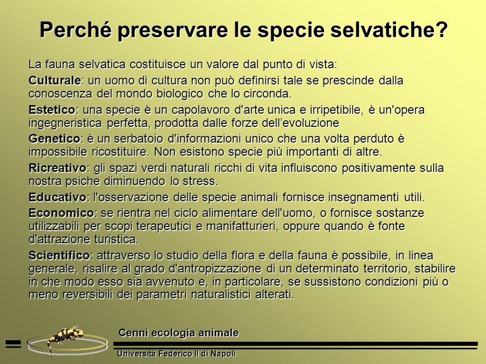 Università Federico II di Napoli Cenni ecologia animale Perché preservare le specie selvatiche? La fauna selvatica costituisce un valore dal punto di