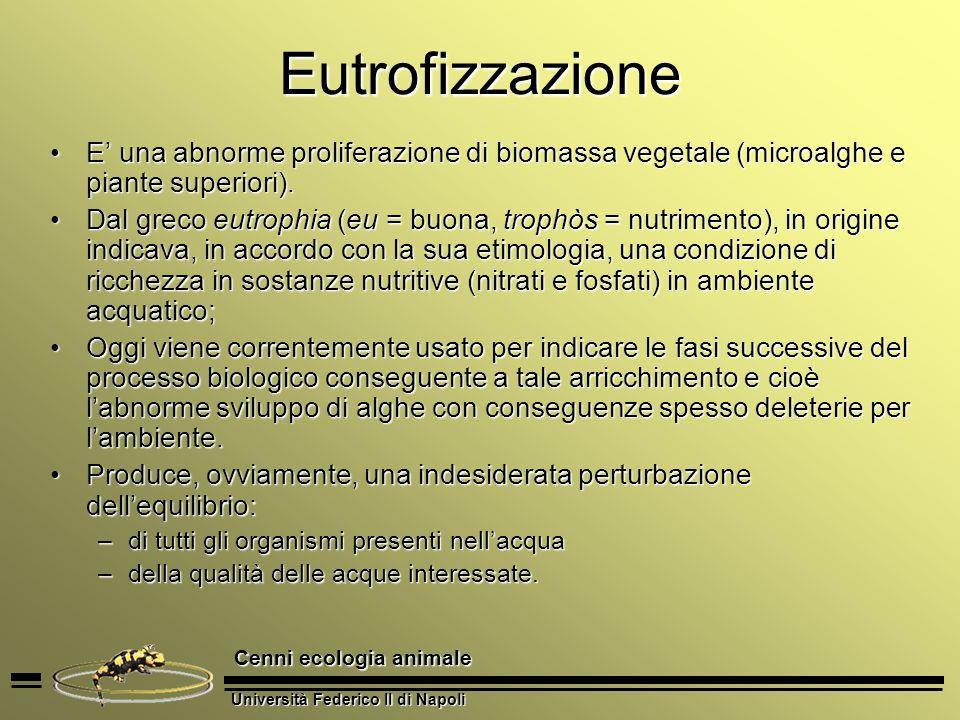 Università Federico II di Napoli Cenni ecologia animale Eutrofizzazione E una abnorme proliferazione di biomassa vegetale (microalghe e piante superio