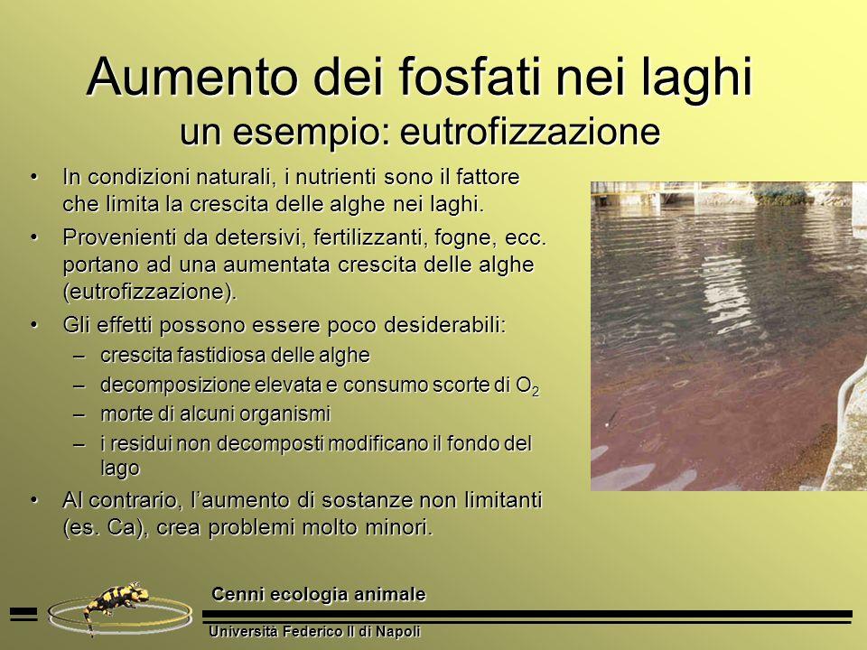 Università Federico II di Napoli Cenni ecologia animale Aumento dei fosfati nei laghi un esempio: eutrofizzazione In condizioni naturali, i nutrienti