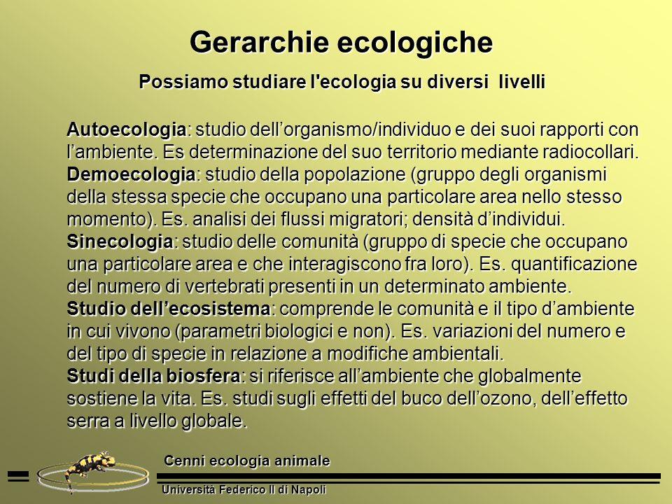 Università Federico II di Napoli Cenni ecologia animale Gerarchie ecologiche Possiamo studiare l'ecologia su diversi livelli Autoecologia: studio dell