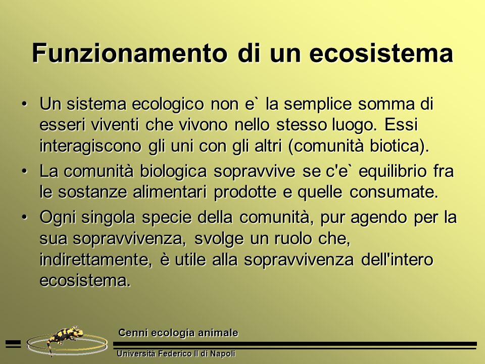 Università Federico II di Napoli Cenni ecologia animale Funzionamento di un ecosistema Un sistema ecologico non e` la semplice somma di esseri viventi