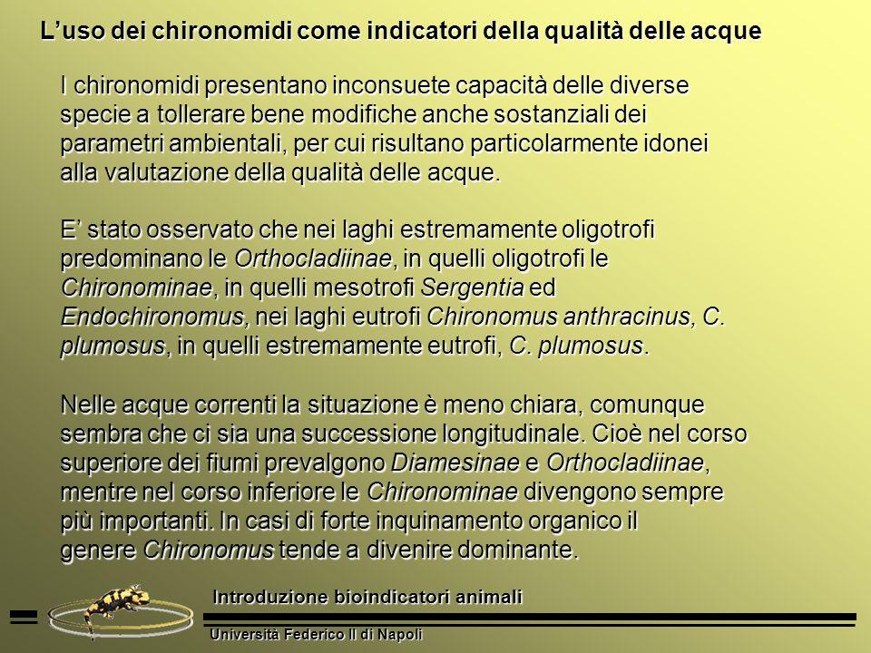 Università Federico II di Napoli Introduzione bioindicatori animali Luso dei chironomidi come indicatori della qualità delle acque I chironomidi prese
