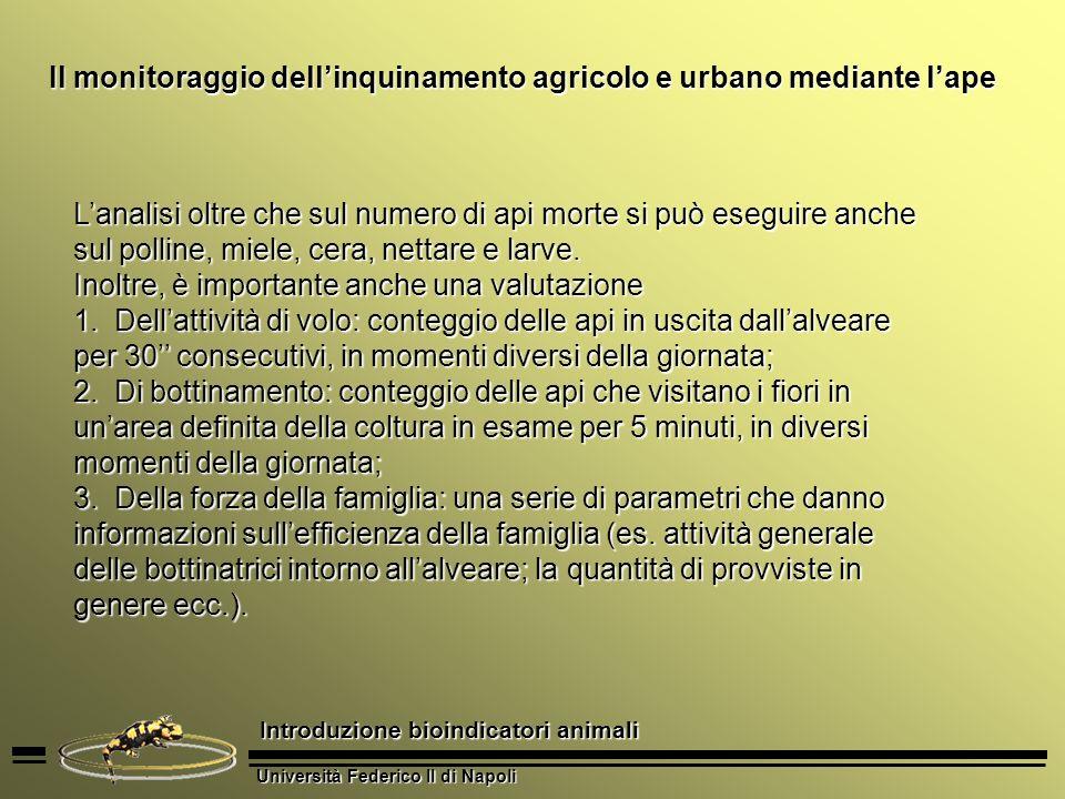 Università Federico II di Napoli Introduzione bioindicatori animali Il monitoraggio dellinquinamento agricolo e urbano mediante lape Lanalisi oltre ch