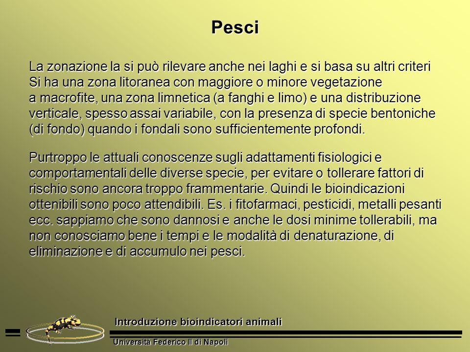 Università Federico II di Napoli Introduzione bioindicatori animali Pesci La zonazione la si può rilevare anche nei laghi e si basa su altri criteri S