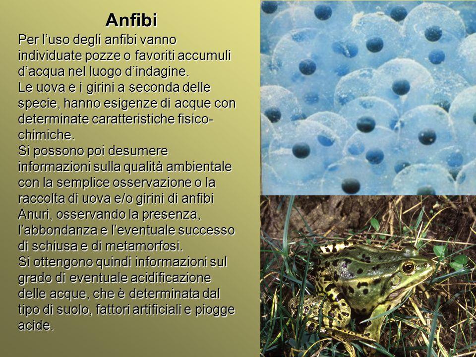 Università Federico II di Napoli Introduzione bioindicatori animali Anfibi Per luso degli anfibi vanno individuate pozze o favoriti accumuli dacqua ne