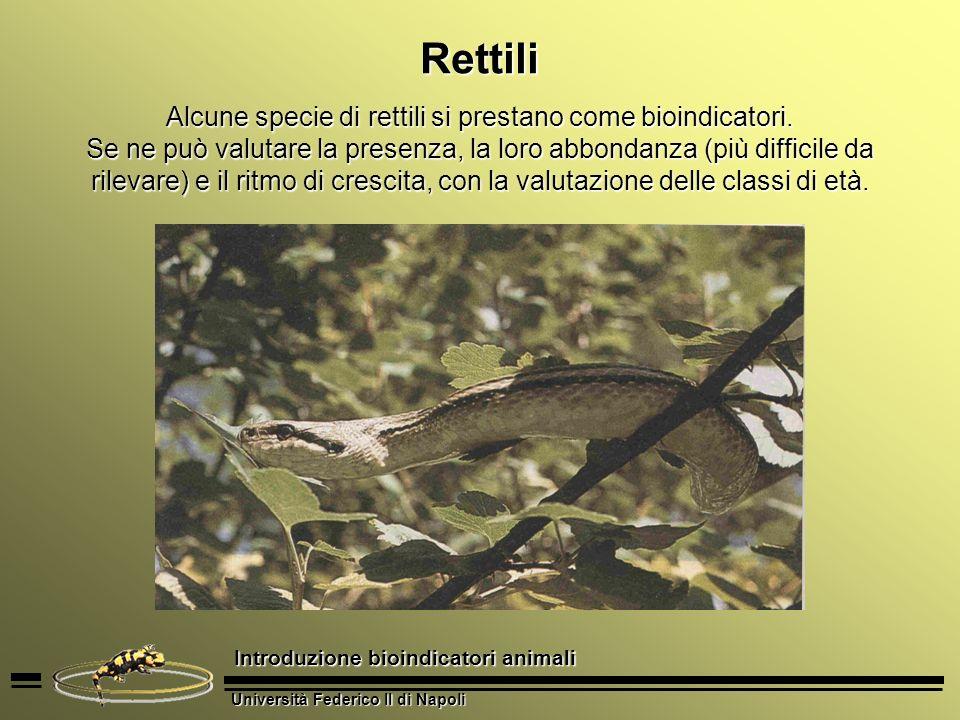 Università Federico II di Napoli Introduzione bioindicatori animali Rettili Alcune specie di rettili si prestano come bioindicatori. Se ne può valutar