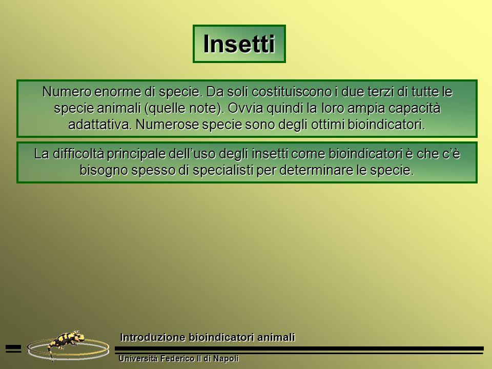 Università Federico II di Napoli Introduzione bioindicatori animali Insetti Numero enorme di specie. Da soli costituiscono i due terzi di tutte le spe