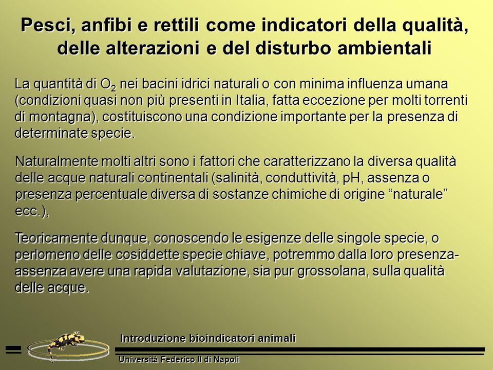 Università Federico II di Napoli Introduzione bioindicatori animali Pesci, anfibi e rettili come indicatori della qualità, delle alterazioni e del dis