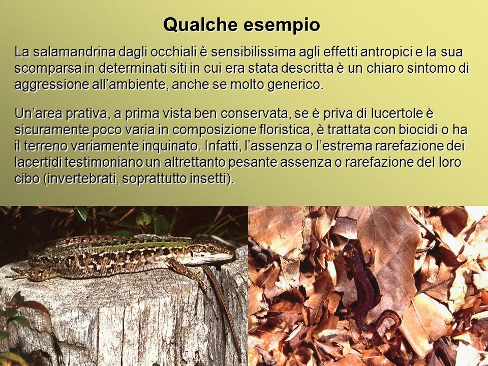 Università Federico II di Napoli Introduzione bioindicatori animali Qualche esempio La salamandrina dagli occhiali è sensibilissima agli effetti antro